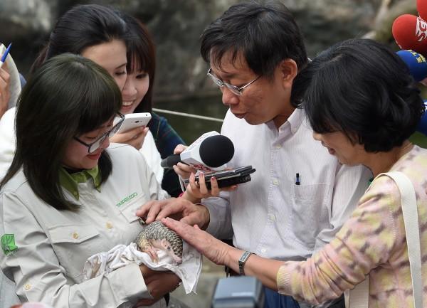 台北市長柯文哲(中)偕同妻子陳佩琪(右)25日參訪台北市立動物園,並搭乘貓纜、走步道,來一場「攬翠之旅」,在動物園時不但參觀非洲獅子區,還和穿山甲寶寶「芎梧」驚喜會面。(記者廖振輝攝)