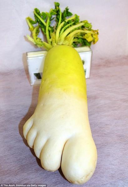 日本農夫在田裡發現這顆「腳掌」蘿蔔,長約30公分,重1.5公斤。(圖片擷取自《每日郵報》)