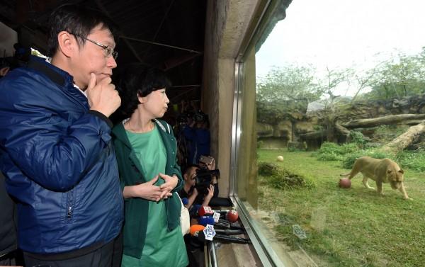 台北市長柯文哲(左)偕同妻子陳佩琪(右)25日參訪台北市立動物園,並搭乘貓纜、走步道,來一場纜翠之旅,在動物園時不但參觀非洲獅子區,還和穿山甲寶寶「芎梧」驚喜會面。(記者廖振輝攝)