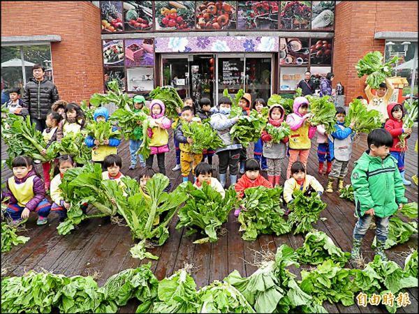 北市客家公園的芥菜經過70多天的栽培,昨邀請80位親子檔,不畏陰雨綿綿,踏入泥濘的田裡採收上千株芥菜。(記者游蓓茹攝)