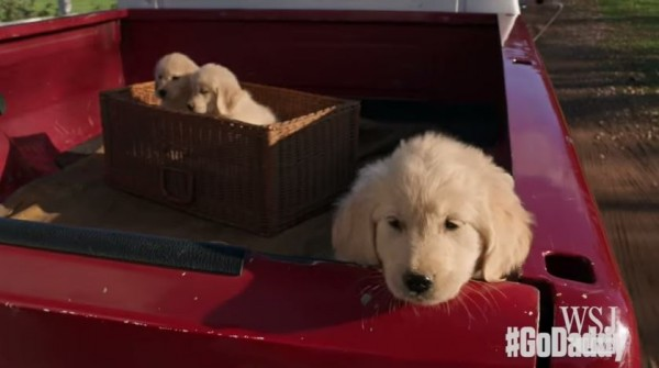 小黃金獵犬從貨車上彈出來掉到路邊,試圖想找到回家的路。(圖取自YOUTUBE)