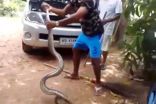 泰男子冷靜從轎車引擎中抓出大蛇,令人驚呼連連。(圖擷取自影片)
