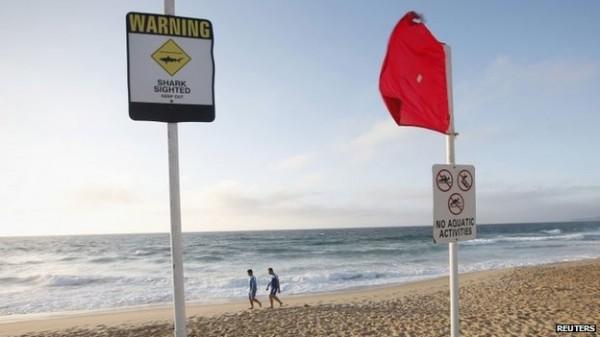 澳洲最近鯊魚襲擊人類意外頻傳,ˊ有不少人認為是媒體太過誇大。(路透)