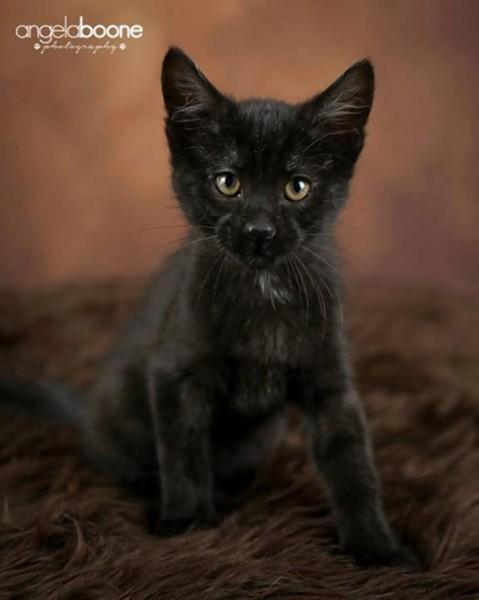 一度遭竊的小貓,幸好平安被歸還。(圖擷取自《紐約每日新聞》)