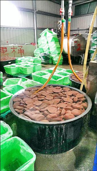 某鴨血加工廠疑似摻偽加入不能食用的肉雞血混充,製作各種米血糕食品出售。(記者楊政郡翻攝)
