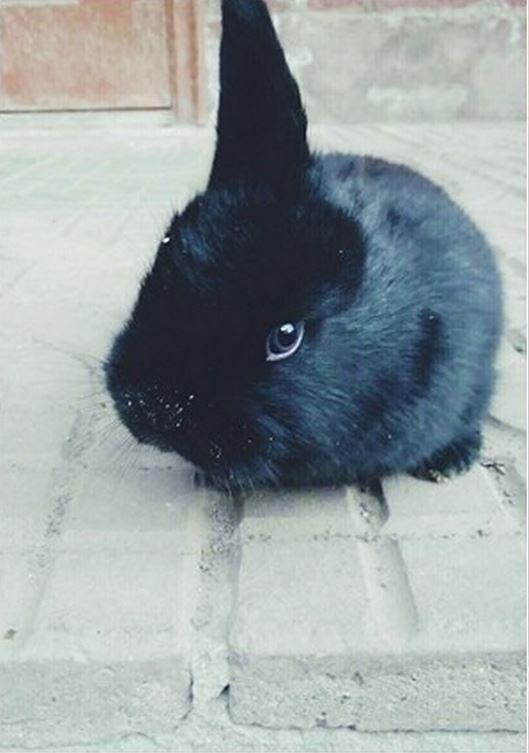 中國男子飼養的母兔於去年底生產,產下三子竟然都只有右邊有耳朵,雖然特殊外觀異於常兔,但「單耳兔」們都相當活潑健康。(圖擷取自互聯網)