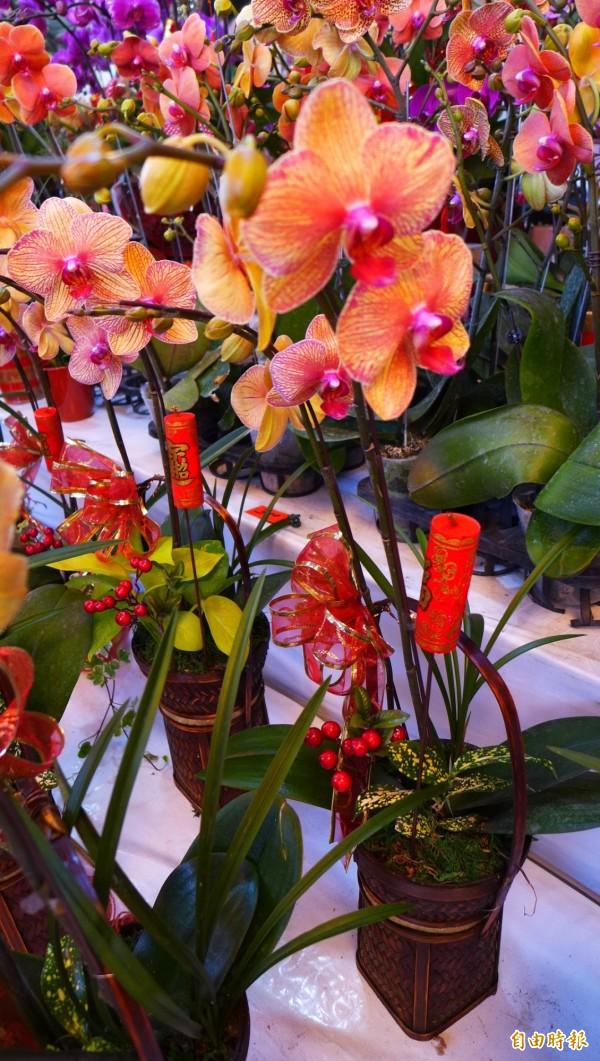 業者指出蝴蝶蘭金吉今年頗受歡迎。(記者俞泊霖攝)