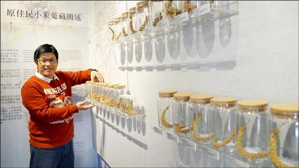 成大教授張松彬的小米研究成果即日起在成大博物館展出。(成大提供)