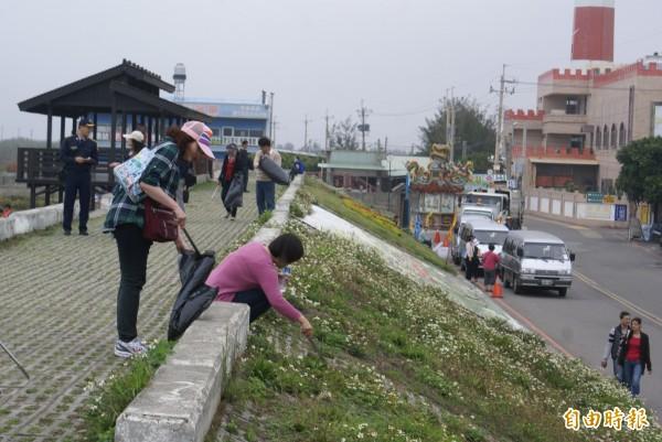 台中港務分公司舉辦家庭日活動,參與員工及眷屬協助清除高美濕週邊垃圾。(記者歐素美攝)