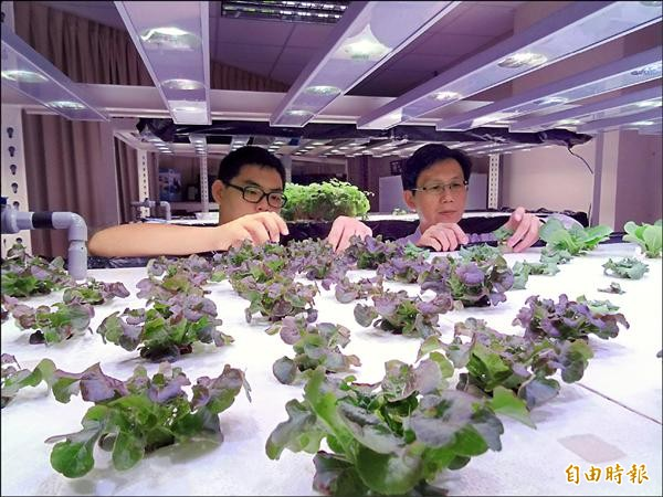 透過控制植物的生長環境,讓植物工廠內的植物能達到安全性與無季節性限制的生產體系。(記者林孟婷攝)