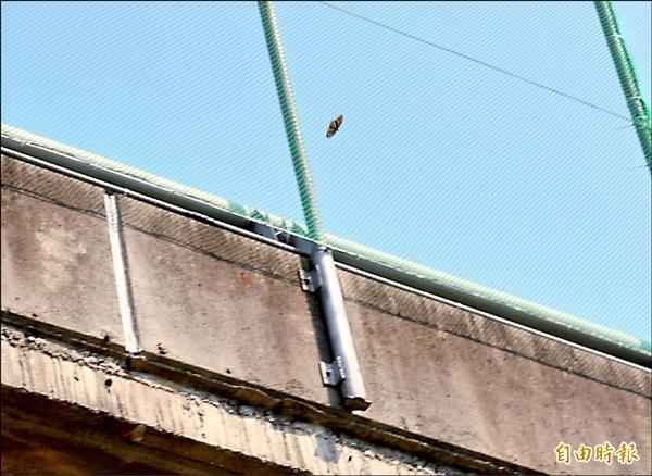 高速公路上的防護網已經架好,希望紫斑蝶「橫越」道路時,能減少死亡率。(記者詹士弘攝)
