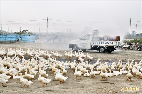 雲林開放式禽場逾八成,恐無法達到復養門檻。(記者林國賢攝)