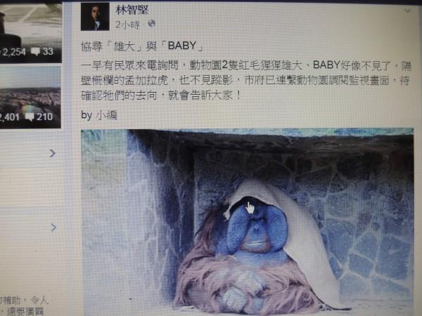 新竹市長林智堅臉書發佈動物協尋的訊息,引起婉君網友的關心,紛紛留言,幾乎灌爆留言,指臉書小編處理不夠嚴謹。(記者洪美秀攝)