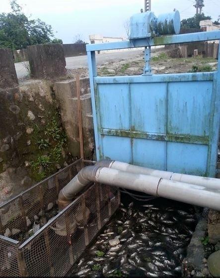 五結鄉親水公園旁溝渠出現近百隻死魚。(圖:翻攝自臉書)