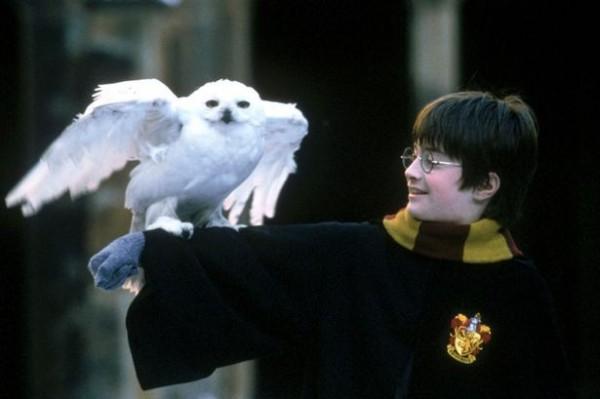 《哈利波特》風靡全球,故事中為巫師送信的貓頭鷹也大受歡迎。然而動保團體指出,英國主題博物館內的貓頭鷹可能被虐待。(圖擷取自《鏡報》)
