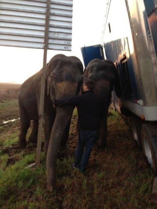 美國路易斯安那州一輛連結車差點在高速公路翻覆,車上2頭大象下來幫忙撐住車身。(圖取自「USA TODAY」)
