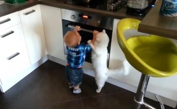 一隻在國外的貓咪,在家裡居然身兼保母的職責,照顧牠的小主人遠離危險的烤箱,主動用全身的力量來阻止小主人玩弄烤箱,讓網友直呼也太可愛了!(圖擷取自YouTube)