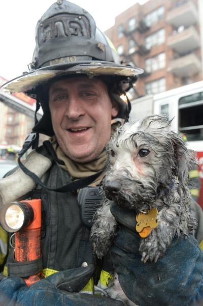 瓦萊里奧(Frankie Valerio)抱著毛髮濕透的米奇從火場走出。(圖片擷取自紐約每日新聞)