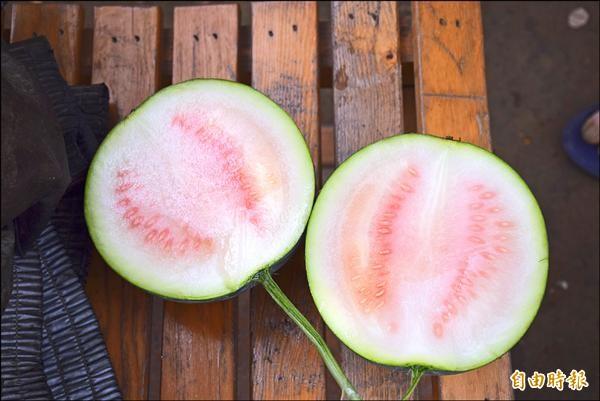 尚未成熟的無籽西瓜,瓜內的種籽發育不完全。(記者吳世聰攝)