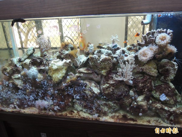 新竹市科學園區實驗中學參與屏東海生館的珊瑚礁大使計畫,除在學校呈現海水珊瑚生態缸。(記者洪美秀攝)