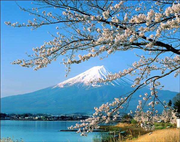 5月前赴日賞櫻,受巴士、飯店漲價影響,團費將較去年漲1到2成。(資料照,日本觀光協會提供)