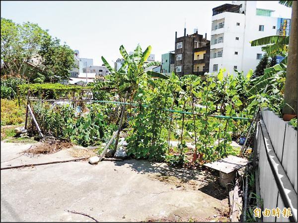 豐原火車站東側都市更新案,佔地一千多坪,雜草叢生,部分農友並在裡面種植作物。(記者歐素美攝)