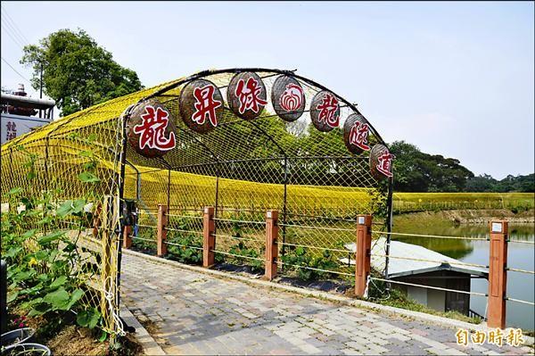 造橋鄉龍昇村長達250公尺的「金瓜綠龍隧道」,預計5月下旬結果,迎接6月6日及7日的藝術季。(記者彭健禮攝)