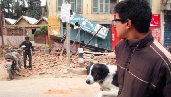 強震之後尼泊爾當地有許多動物被迫與主人分開。(圖擷自《印度時報》)