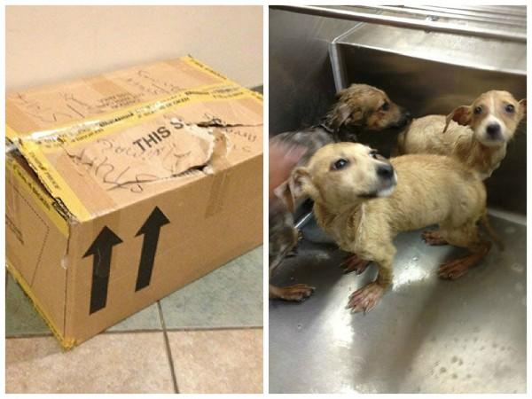 惡劣的飼主居然將3隻可愛的幼犬當 「絨毛玩具」塞在封死的紙箱裡,並把牠們丟在停車場等死。(圖取自McKamey Animal Center臉書)
