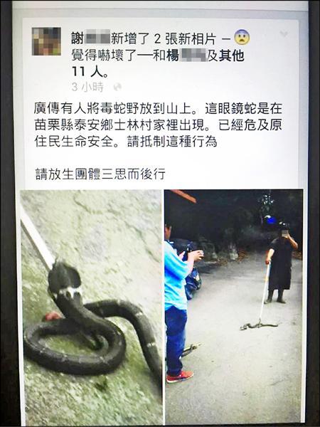 嚇死人!泰安鄉疑遭野放眼鏡蛇,驚現40幾條。(擷取自劉美蘭臉書)