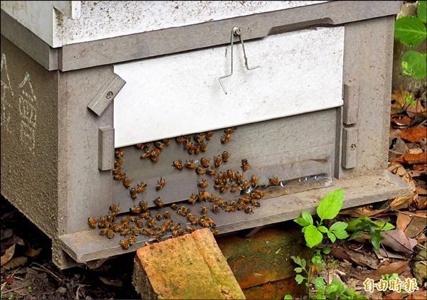 心路基金會與多家企業合作,開始「都市養蜂」計畫,圖為位於台北市虎山的微遠虎山生態農場的蜂箱。(記者陳炳宏攝)