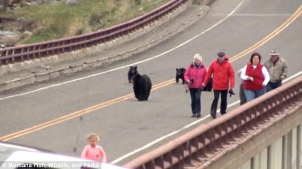 被黑熊追著跑的遊客。(圖片擷取自「每日郵報」報導)