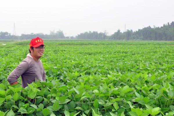 合理化施肥,不僅可節省肥料用量,也提昇毛豆生產品質。(記者林孟婷翻攝)