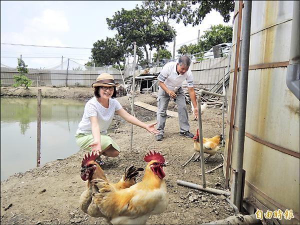 王玉彰在農場養雞、鴨、羊及牛等各種動物協助工作,前縣長蘇治芬特別前往參觀。(記者黃淑莉攝)