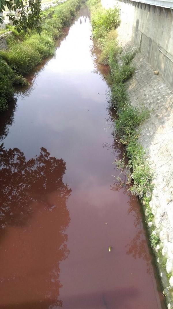 紅河!永靖鄉湳港排水遭污染,整條排水溝變紅色。(圖由讀者提供)