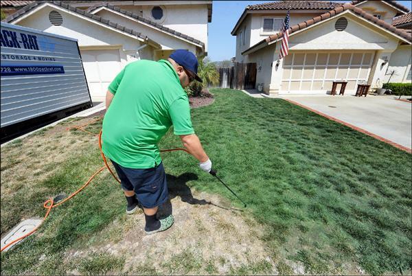 加州草坪美化公司LawnLift因應乾旱推出草皮噴漆服務,以無毒性的天然顏料噴在草皮上,維持草坪綠油油景致。圖為LawnLift人員12日在一戶住家施工。(法新社)