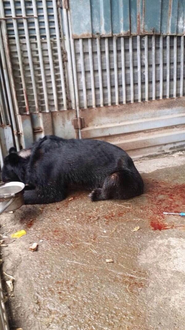 黑熊咬傷主人後,地上血跡斑斑。(記者羅欣貞翻攝)