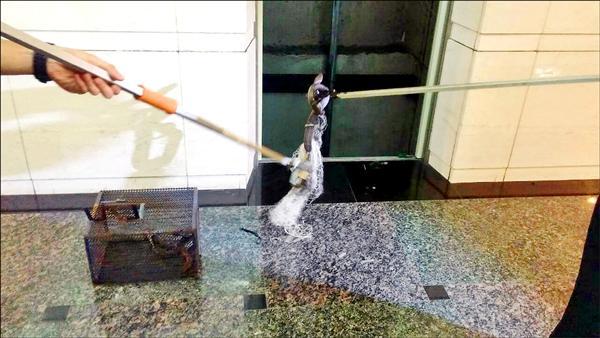 五天後,員工成功在地下一樓捕到這條蛇。(圖由讀者提供)