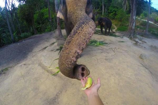 當時相機是設定在縮時攝影的模式,每隔一段時間就會自動拍照,也因此才能捕捉到這張大象自拍照。(圖取自鏡報)