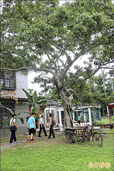 「北埔愛客影像祭」系列活動,明天將在百年榕樹下開幕。(記者黃美珠攝)