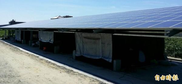 蔡茱娣蓋太陽能菇寮,上種電、下種黑木耳「涼」賺錢。(記者陳文嬋攝)