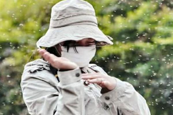 中國江蘇省南京市近日出現大量白色「柳絮」飄散市區,專家表示,那是一種形似柳絮的「榆四脈綿蚜」。(圖取自網路)