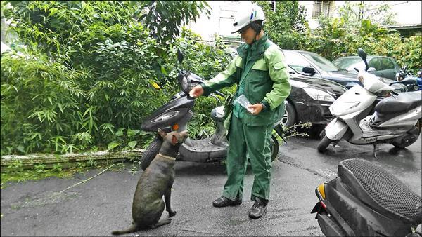 台北郵局推出「跟狗狗做朋友」專案,希望親近狗狗,圖為延平北路某處郵差成功餵野狗沒被追咬。(記者黃立翔翻攝)