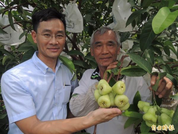 林永豐(右)用有機肥栽種白蓮霧,新市區長邱保華鼓勵他多栽種幾株、提昇產量。(記者林孟婷攝)