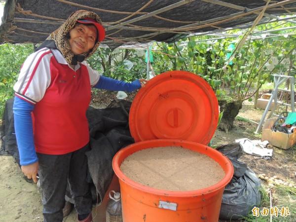 運用黃豆、豆渣、糖蜜所製成的天然有機肥料,為白蓮霧樹「打好基底」。(記者林孟婷攝)