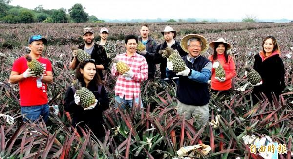 龍目社區「一日農夫」揚名國際,每年吸引國外觀光客來台採鳳梨。(記者陳文嬋攝)
