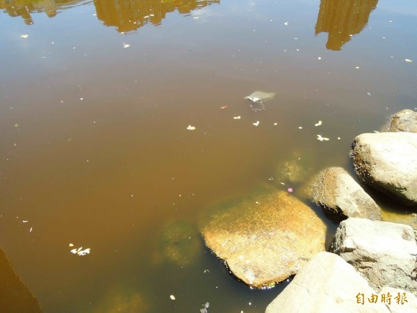 愛河變黃河,河面飄著不明稠狀物。(記者黃旭磊攝)