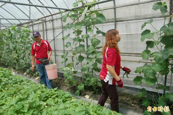 洪進鴻(左)感謝學校採購有機蔬菜,減輕他不少壓力。(記者陳燦坤攝)