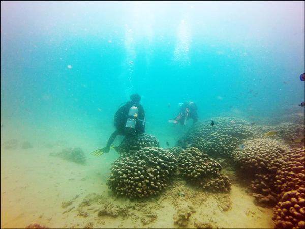 潛水教練把雀屏珊瑚當椅子坐,引起其他潛水愛好者不滿。(記者蔡宗憲翻攝)