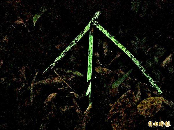 長條型的螢光蕈,附著在枯木上,形成一座螢光金字塔。(記者余雪蘭攝)